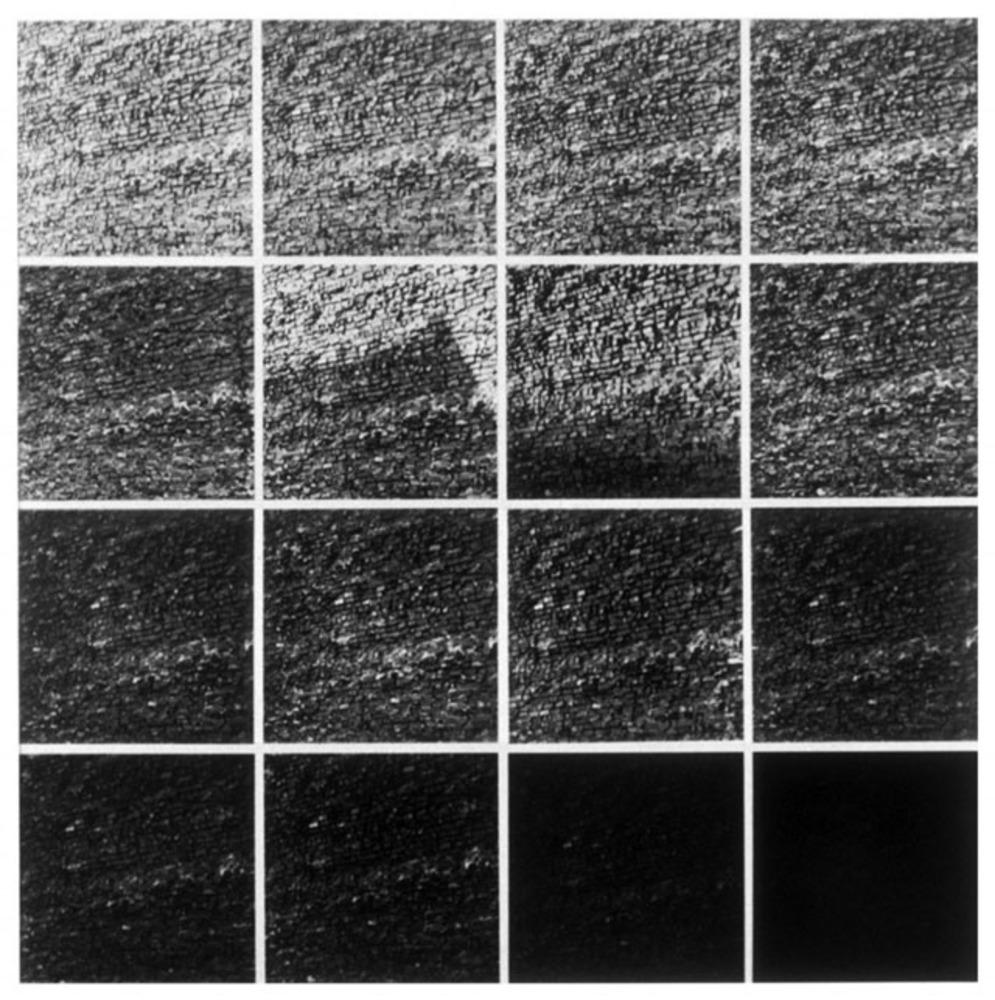 Large lewitt   brick wall  1977