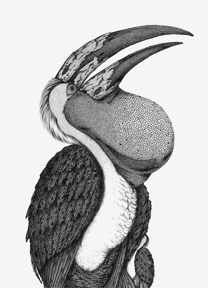 Large suthipa beneaththedarkwing