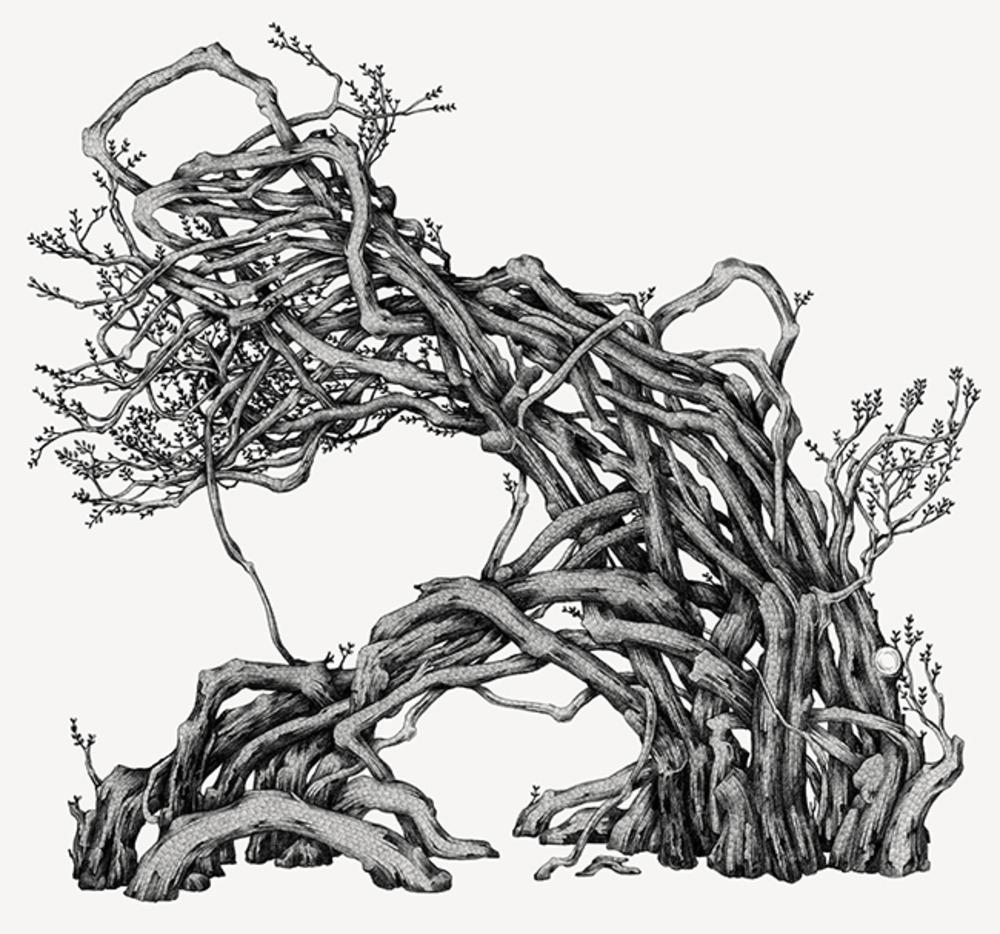 Large suthipa tree